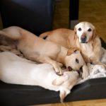 Wasze ulubione materiały w aranżacji wnętrz dla psiaków