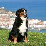 Hodowla psów w Hiszpanii